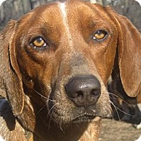 Adopt A Pet :: Kellan - Jacksonville, FL