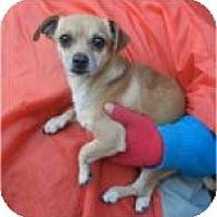 Adopt A Pet :: Little Louie - Antioch, IL