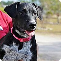 Adopt A Pet :: Destiny - Wakefield, RI