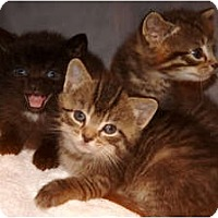 Adopt A Pet :: Peter, Paul & Mary - Xenia, OH