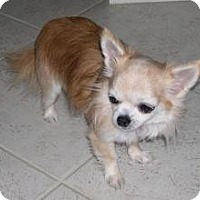 Adopt A Pet :: Trinket - N. Fort Myers, FL