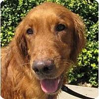 Adopt A Pet :: Madison - Denver, CO