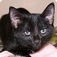 Adopt A Pet :: *Heckyl & Jeckyl - Winder, GA