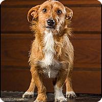 Adopt A Pet :: Governor Morris - Owensboro, KY