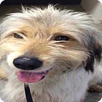 Adopt A Pet :: Gomez - Austin, TX