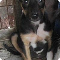 Adopt A Pet :: Daisy - San Ysidro, CA
