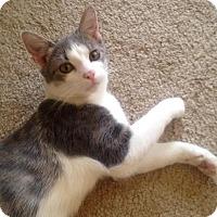 Adopt A Pet :: Ember - St. Louis, MO