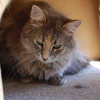Adopt A Pet :: Glasgow - Brainardsville, NY