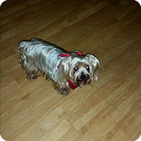 Adopt A Pet :: Sunny - Orlando, FL