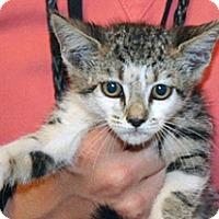 Adopt A Pet :: Casada - Wildomar, CA