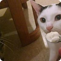 Adopt A Pet :: Bubalicious - Glen cove, NY