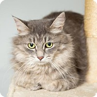 Adopt A Pet :: Muskie - St. Paul, MN