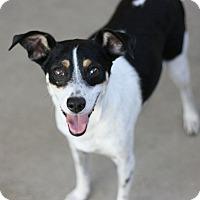 Adopt A Pet :: Sketchy - Canoga Park, CA