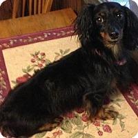 Adopt A Pet :: Toby - Humble, TX