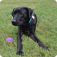 Adopt A Pet :: Leo - Hagerstown, MD