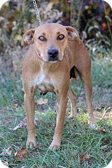 Hound (Unknown Type) Mix Dog for adoption in Waldorf, Maryland - Kat