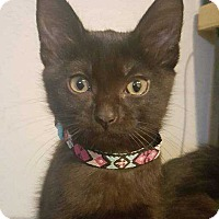 Adopt A Pet :: Karma - South Bend, IN