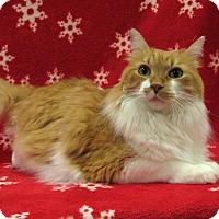 Adopt A Pet :: Tweety - Redwood Falls, MN