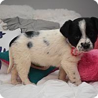 Adopt A Pet :: Ester - Eden Prairie, MN