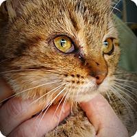 Adopt A Pet :: Gigi - Summerville, SC