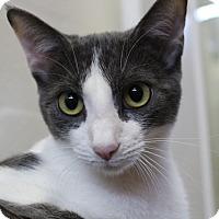 Adopt A Pet :: Traveler - Sarasota, FL