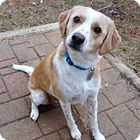 Adopt A Pet :: Jack Frost - Huntsville, AL