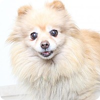 Adopt A Pet :: Ruffles D170108: PENDING ADOPTION - Edina, MN