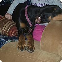 Adopt A Pet :: Jemma - Warren, MI