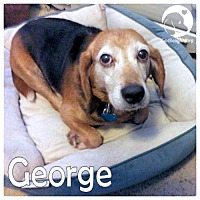 Adopt A Pet :: George - Pittsburgh, PA