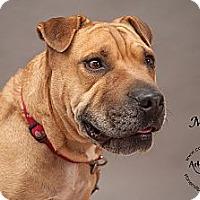 Adopt A Pet :: Mia - Westfield, NY