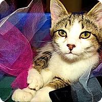 Adopt A Pet :: Adorable - Midway, GA