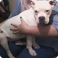 Adopt A Pet :: Sam - Garwood, NJ