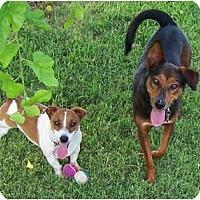Adopt A Pet :: RIKER & TIGER - Phoenix, AZ
