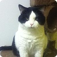 Adopt A Pet :: Pongo - Colorado Springs, CO