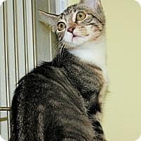 Adopt A Pet :: Jazmeena - Edmonton, AB