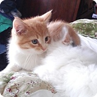 Adopt A Pet :: Sylvio -Adoption Pending! - Colmar, PA