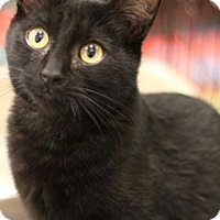 Adopt A Pet :: Levi - Sacramento, CA