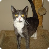 Adopt A Pet :: Patsy - Woodstock, ON