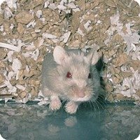 Adopt A Pet :: Buddy - Bensalem, PA