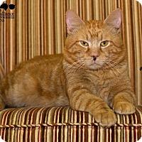 Adopt A Pet :: Tiger - Baton Rouge, LA