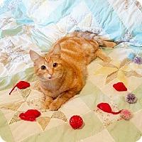 Adopt A Pet :: Candy - Arlington/Ft Worth, TX
