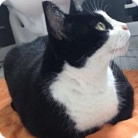 Adopt A Pet :: Bootsie - Austin, TX