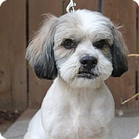 Adopt A Pet :: Wendy - Los Angeles, CA