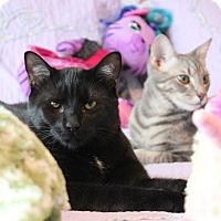 Adopt A Pet :: Henry - Carlisle, PA