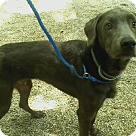 Adopt A Pet :: Sterling