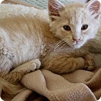Adopt A Pet :: Ridley - Polson, MT