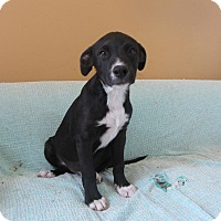 Adopt A Pet :: Rebel and Honor - Ridgway, CO