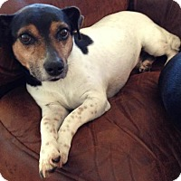 Adopt A Pet :: BAXTER - COURTESY LISTING - Baton Rouge, LA