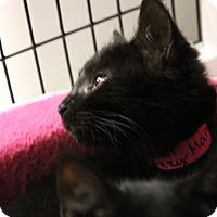 Adopt A Pet :: Mahi - Medina, OH