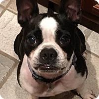 Adopt A Pet :: Oreo - Van Vleck, TX